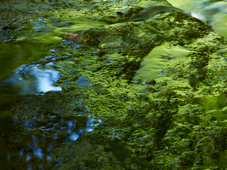 Photo titled Reflection of Green Beech Woods, taken by Meiki Lin
